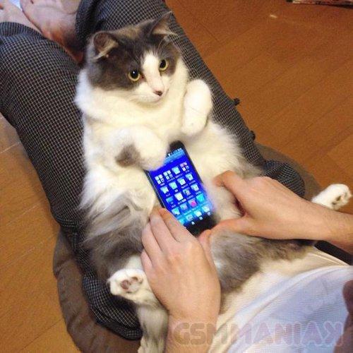 obudowy do telefonów komórkowych