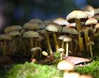 Idziemy na grzyby, czyli jakie aplikacje przydadzą się w lesie